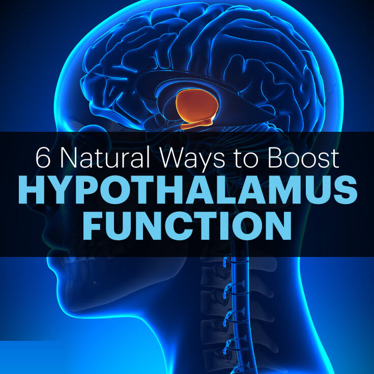 Hypothalamus function - MKexpress.net