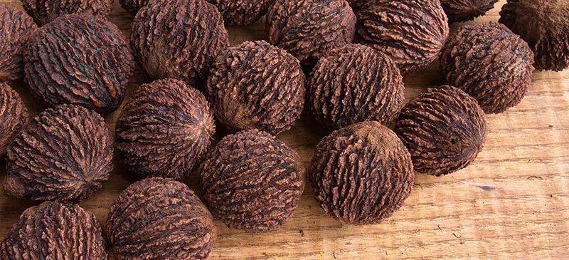 Black walnut - MKexpress.net