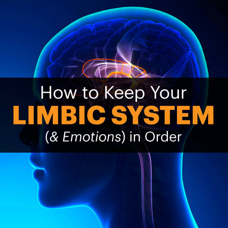 Limbic system - MKexpress.net