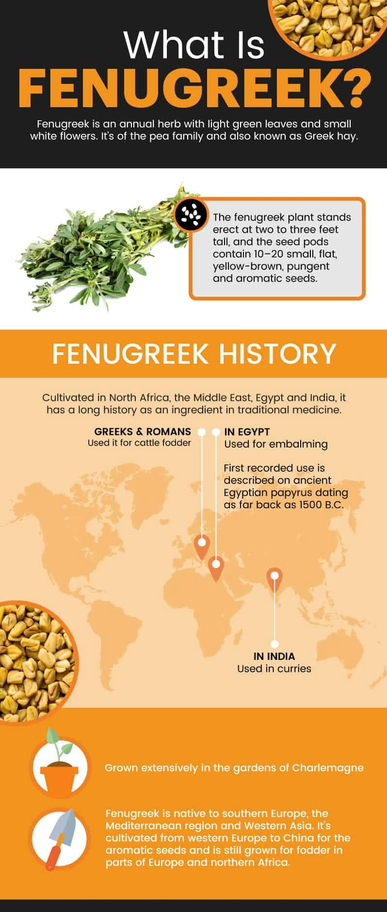 What is fenugreek?
